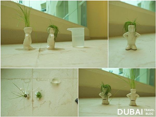 dubizzle small plants dubai