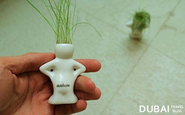 dubizzle water hair plant