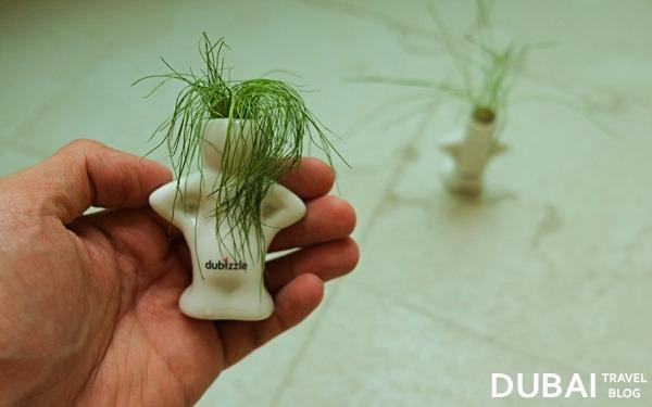 hair plant dubizzle