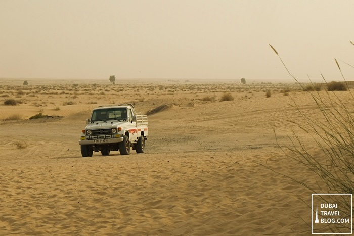 desert safari adventure dubai