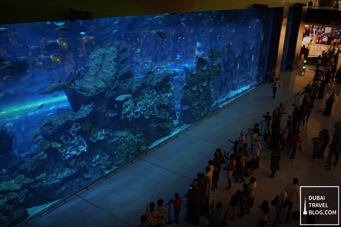 dubai-mall-aquarium.jpg