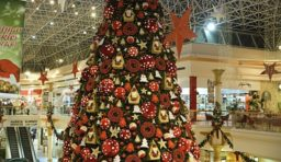 Is this the Biggest Christmas Tree in Dubai?