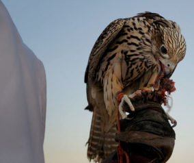 Understanding UAE Heritage Sports and Dance