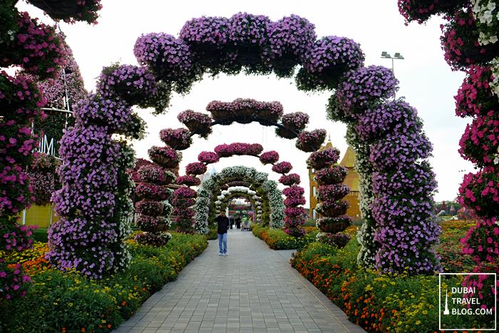 dubai miracle garden photo