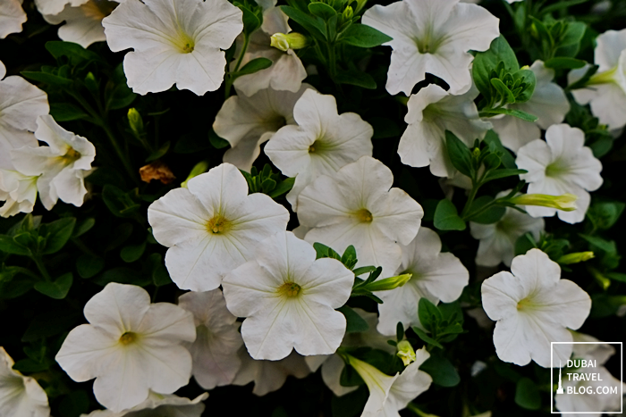 flower miracle garden dubai