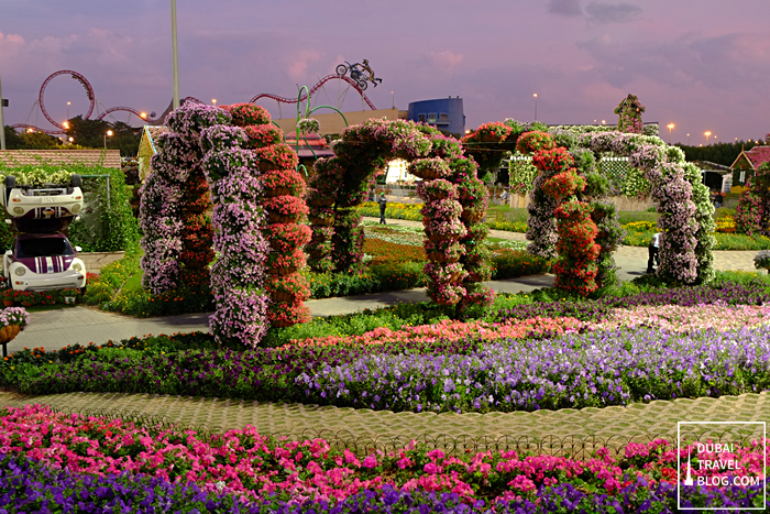 miracle garden photo in dubai
