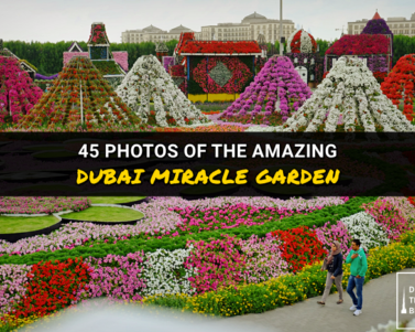 45 Photos of the Amazing Dubai Miracle Garden