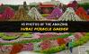 45 Photos of the Amazing Dubai Miracle Garden