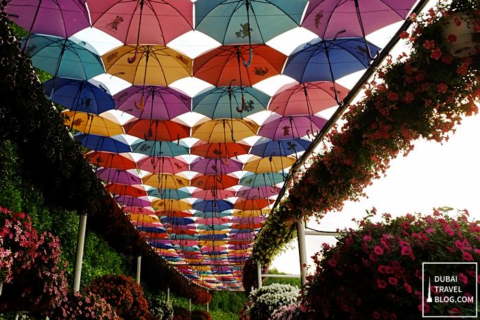 umbrellas in dubai miracle garden