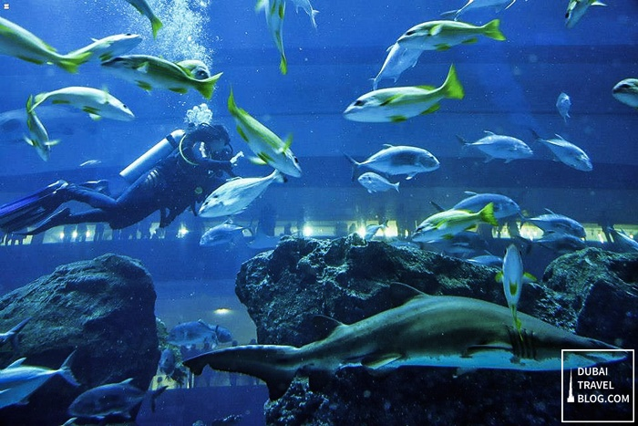 Shark Dive Experience in the Dubai Aquarium   Dubai Travel Blog
