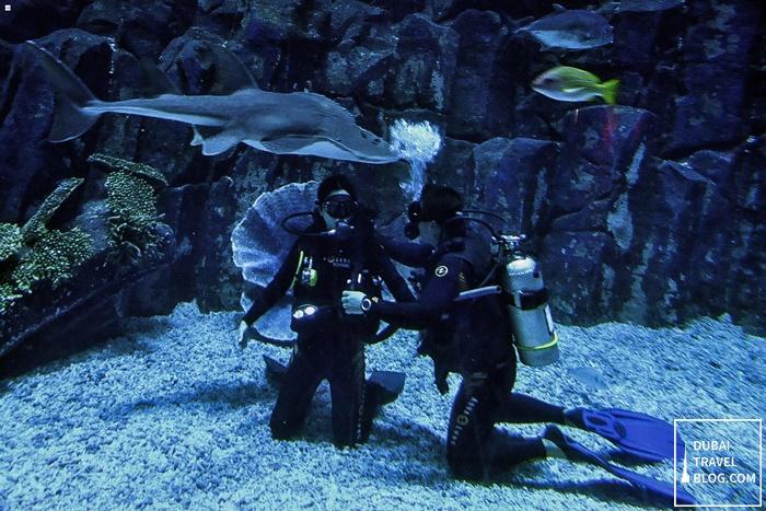 dubai aquarium scuba dive