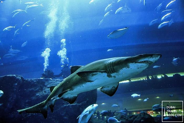 dubai mall aquairum diving