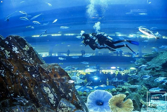 swimming dubai aquarium