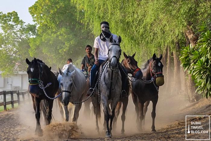 horses polo dubai desert palm
