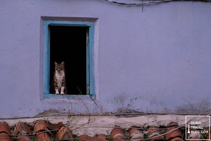 cat in chefchaouen