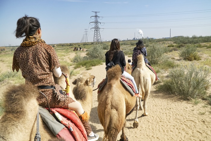 camel ride ningxia china