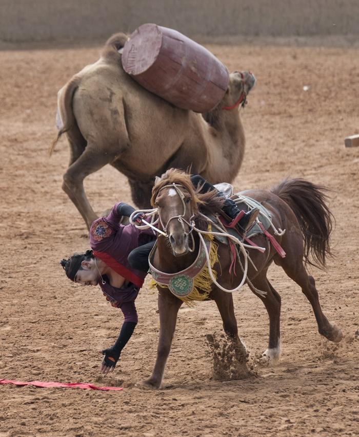 grand war horse show