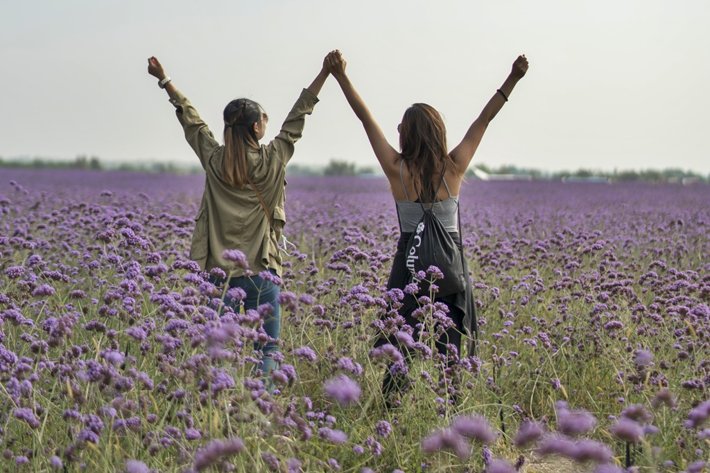 purple flower fields jinsha island ningxia photo