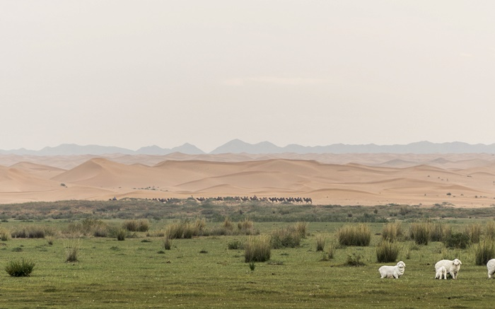 tonghu grassland ningxia