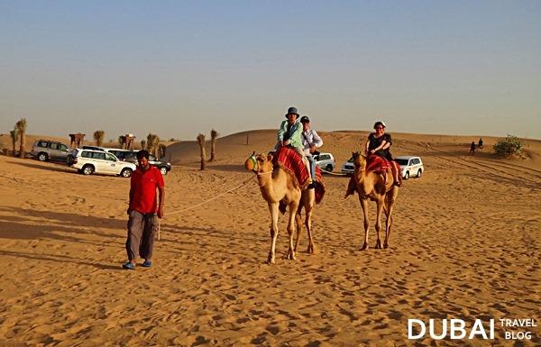 desert safari camel