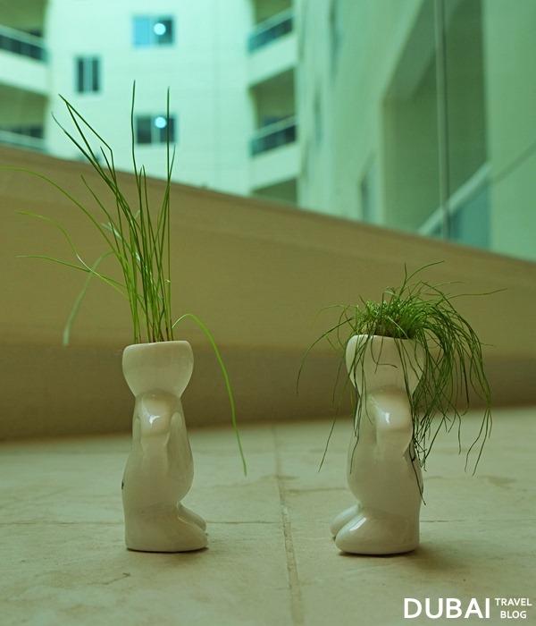 dubizzle small plants