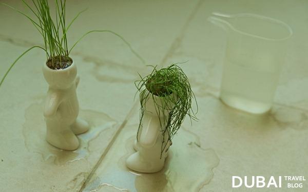dubizzle water plants