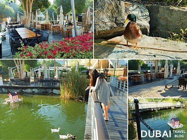 ducks at jumeirah creekside_thumb