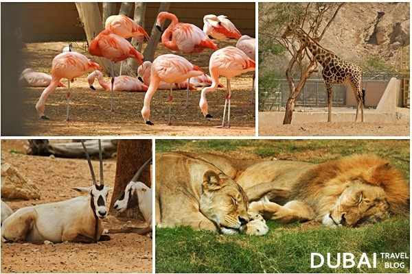 al ain zoo animals