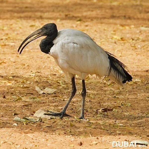 bird al ain zoo