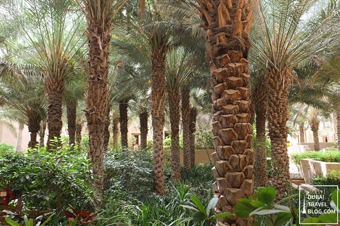 trees in the desert resort oasis