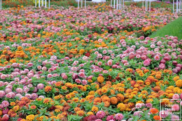 dubai flower garden dubailand