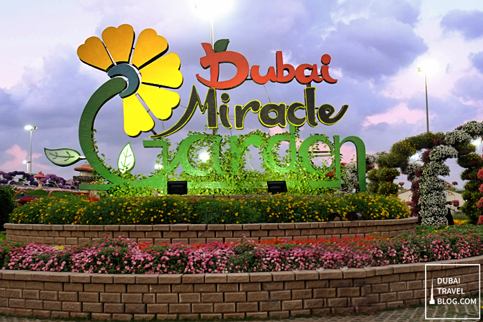 45 Photos Of The Amazing Dubai Miracle Garden Dubai Travel Blog