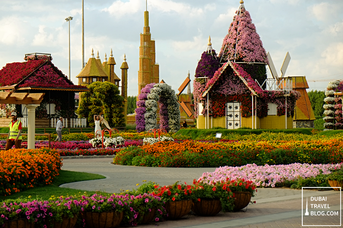 flowers-at-dubai-miracle-garden