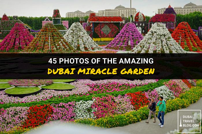 photos dubai miracle garden photowalk
