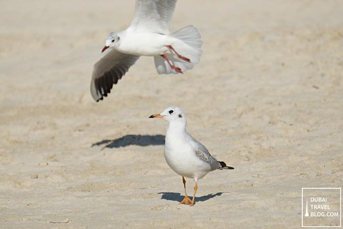 JBR birds
