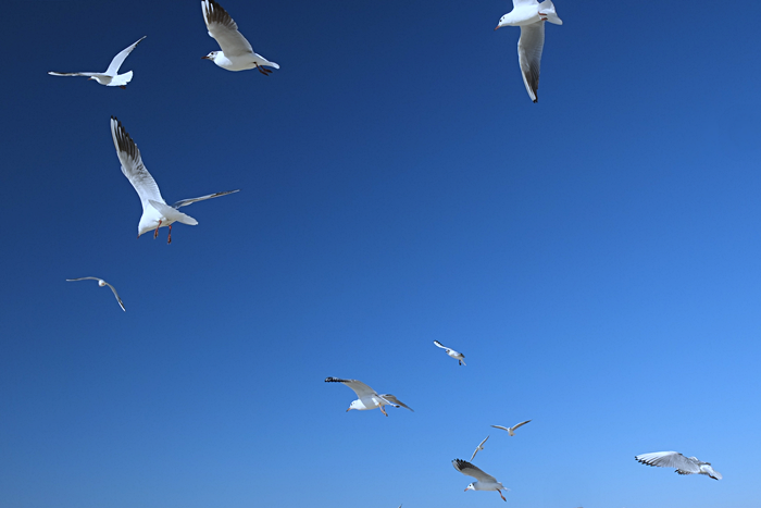 dubai birds JBR