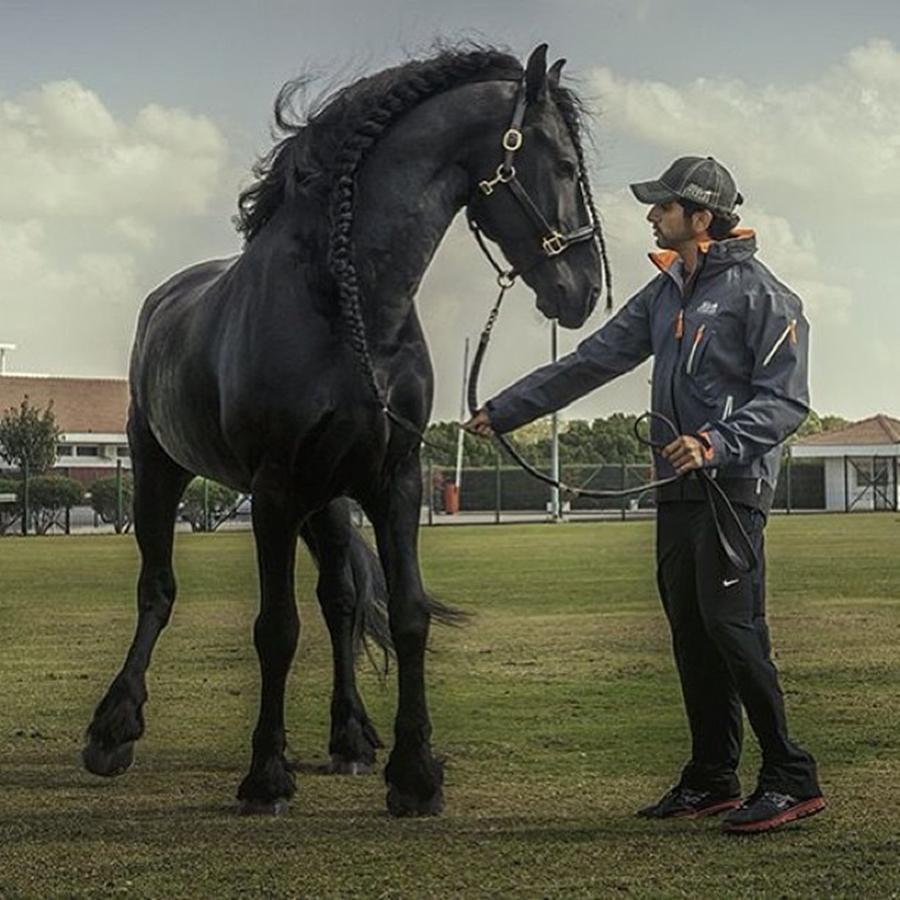 Sheikh Hamdan Black Horse