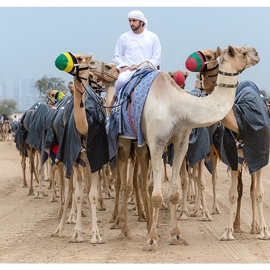 Sheikh Hamdan Camel Ride