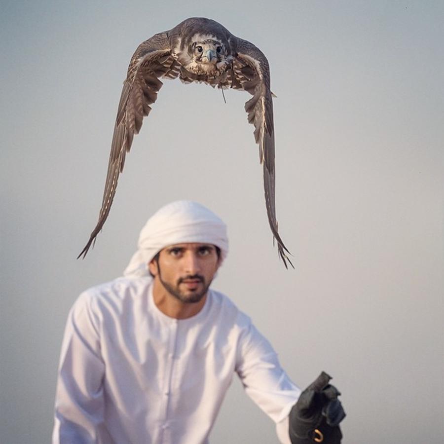 Sheikh Hamdan Falcon