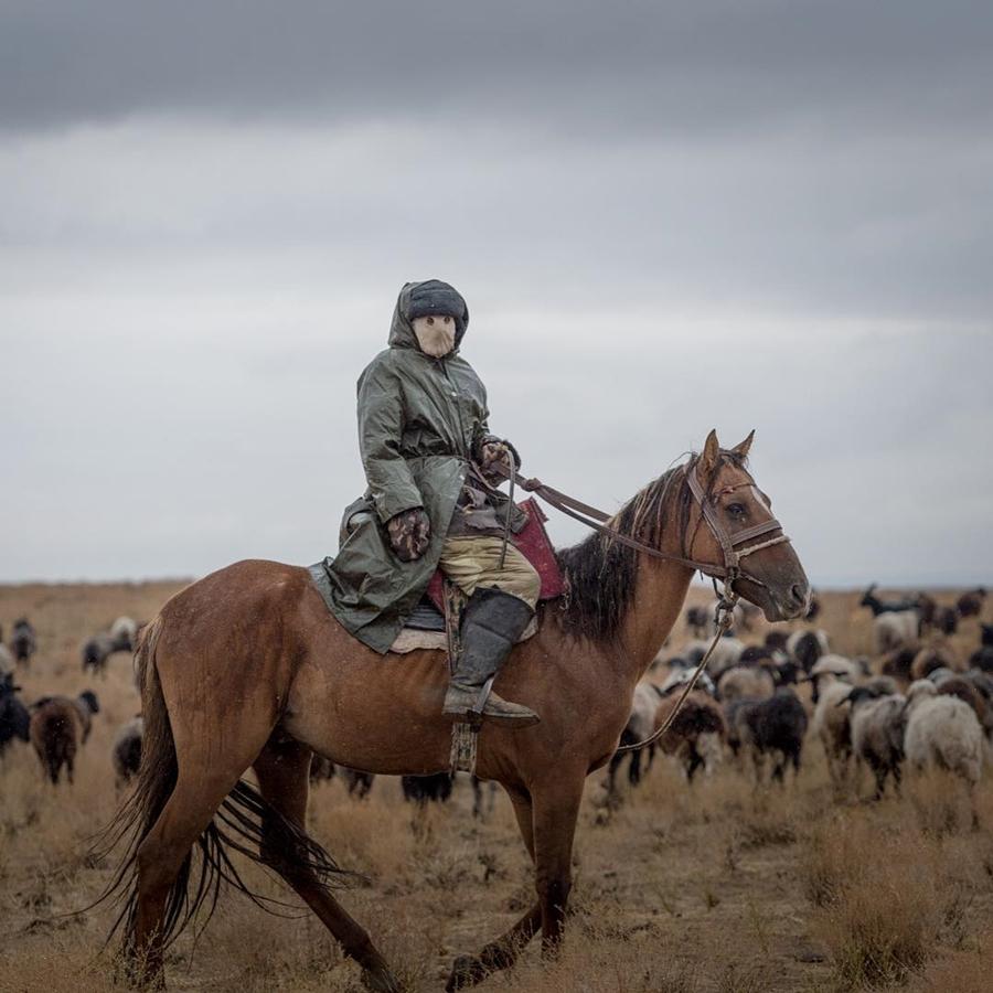 Sheikh Hamdan Uzbekistan Horse