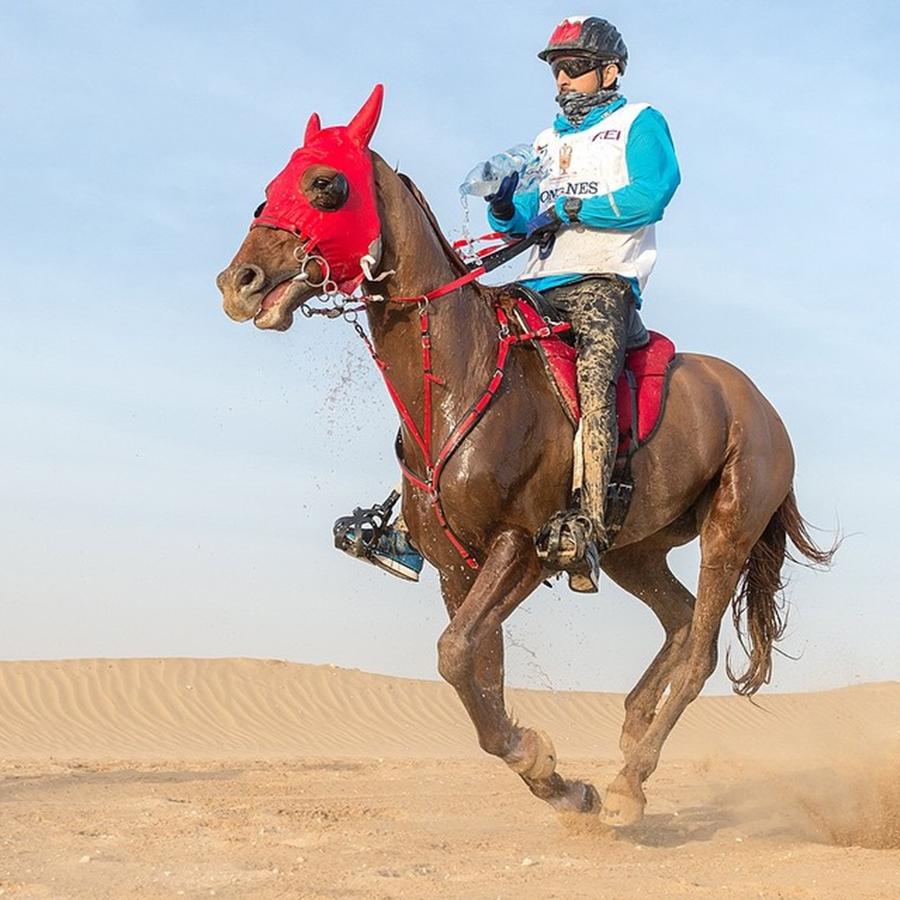 Sheikh Hamdan Horse Ride