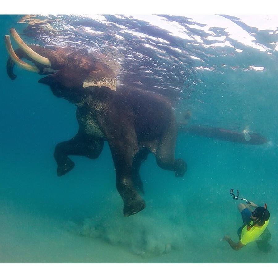 Sheikh Hamdan Swimming With Elephant