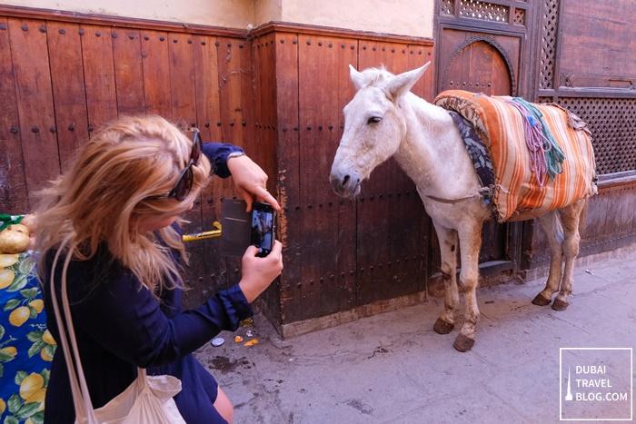 fez donkey photo
