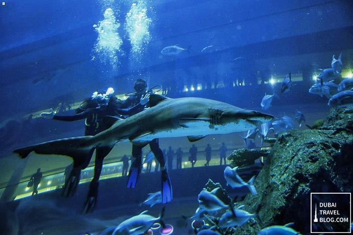 shark diving dubai