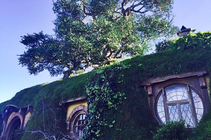 auckland new zealand hobbiton tour