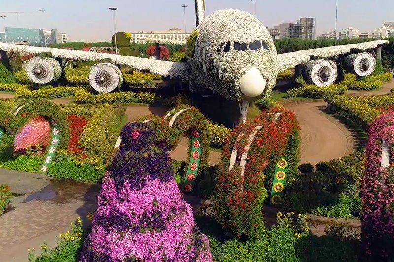 A380 plane flower