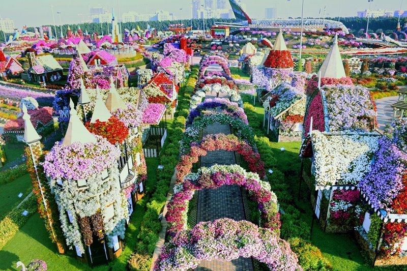Dubai Miracle Garden picture