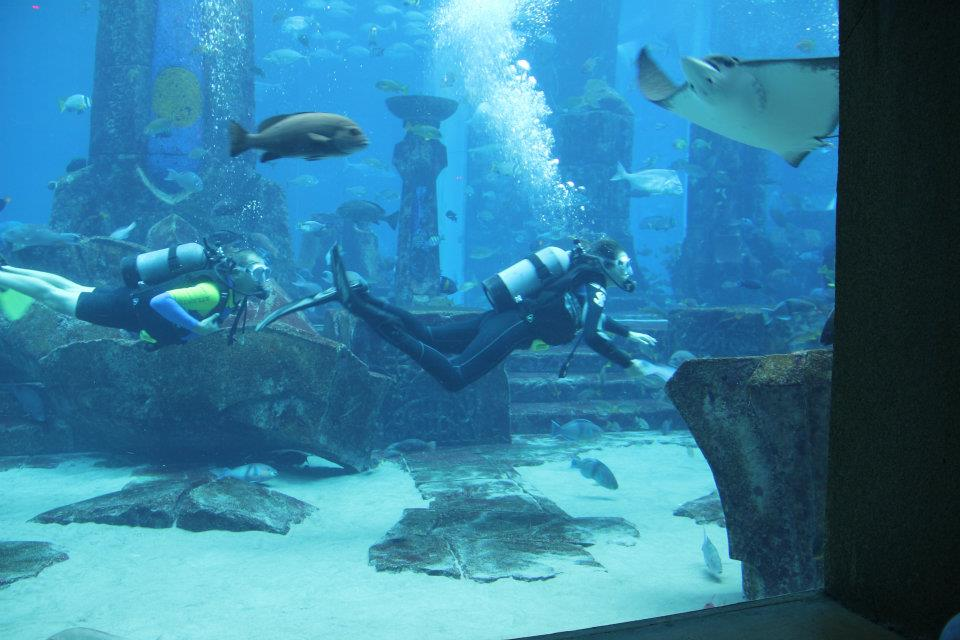 Shark Week Atlantis The Palm Dubai