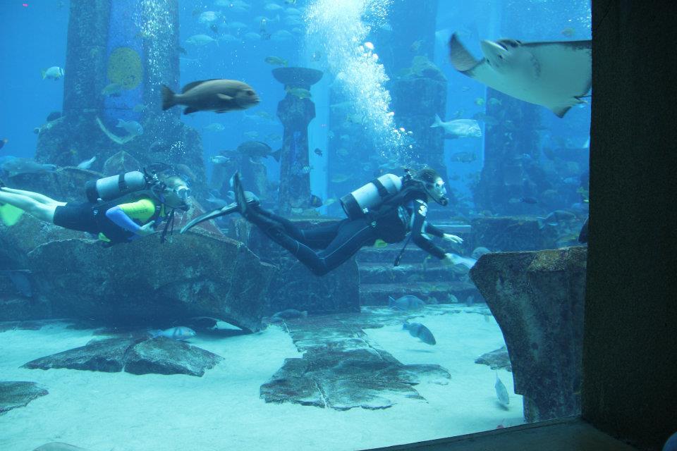 Shark Week Atlantis The Palm Dubai