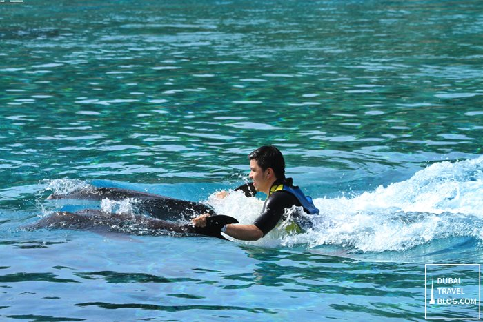 dubai dolphin experience at atlantis the palm